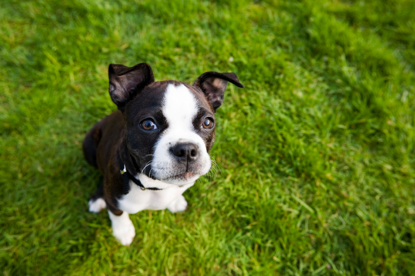 Best Miniature Dogs Uk